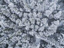 De winter in het bos - hommelfoto van ijzige bomen stock foto's