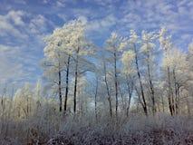 De winter in het dorp Stock Fotografie