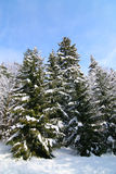 De winter in het meest forrest Stock Afbeelding
