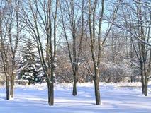 De winter in het park Stock Afbeelding