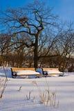 De winter in het Park Stock Afbeeldingen