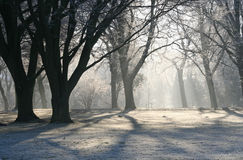 De winter in het Park Stock Fotografie
