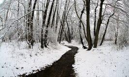 De winter in het park royalty-vrije stock foto