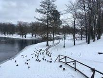 De winter in het park royalty-vrije stock fotografie