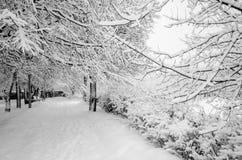 De winter in het park in Februari na een sneeuwval Stock Foto's