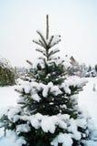De winter in het platteland Royalty-vrije Stock Afbeelding