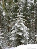 de winter het schilderen op de boom stock afbeelding