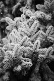De winter, Hoar op takken Stock Foto's