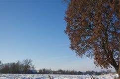 De winter in Holland Stock Foto