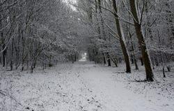 De winter in Holland Stock Afbeelding