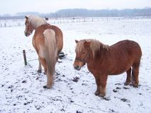 De winter in Holland 3 Royalty-vrije Stock Afbeelding