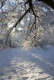De winter III Stock Foto