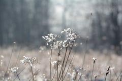 De winter - Ijzig gras Stock Foto's