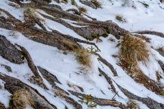 De winter interessant landschap De achtergrond van boomwortels en droog gras Royalty-vrije Stock Foto's