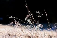 De winter komt Stock Foto