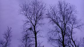 De winter komt Stock Afbeeldingen