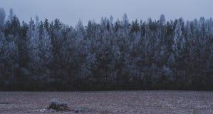 De winter komt Bevroren overzees Niets sloeg rotsen royalty-vrije stock afbeelding