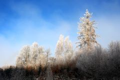 De winter komt, koude en zonnige de winterdag Stock Fotografie