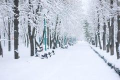 De winter koude dag in park Snow-covered bomen en banken in het stadspark Boomgroepering in de winter parkland royalty-vrije stock afbeeldingen