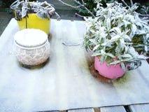 De winter, koude dag, tuin, bloemen Stock Fotografie
