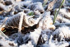 De winter, koude, vorst stock foto's