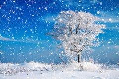 De winter landelijk landschap met één boom en blauwe hemel Royalty-vrije Stock Afbeeldingen