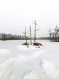 De winter landelijke scène met mist en witte gebieden Stock Afbeelding