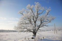 De winter landscale, eenzame eiken boom op snow-covered gebied Stock Afbeeldingen
