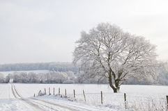 De winter landscap Royalty-vrije Stock Foto's
