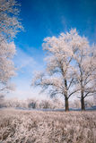 De winter landscape_1 Stock Foto's