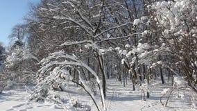 De winter Lanscape stock videobeelden