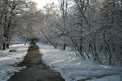 De winter lanscape Stock Afbeelding