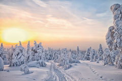 De winter in Lapland stock foto's