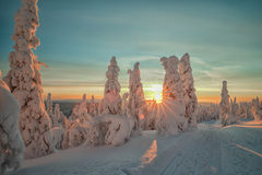 De winter in Lapland Stock Foto's
