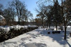 De winter in Maart in stadspark 1 stock afbeelding