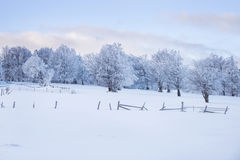 De winter magische scène op een Berg in Roemenië Royalty-vrije Stock Foto's