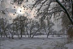 De winter, meer en vogels Royalty-vrije Stock Afbeeldingen