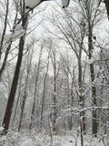 De winter in Michigan stock afbeelding