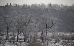De winter mystiek bos Stock Foto