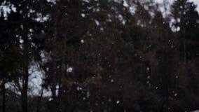 De winter Naaldforest during snowfall Pijnboombomen Behandelde Sneeuw, Sneeuwvlokken die langzaam vallen stock videobeelden