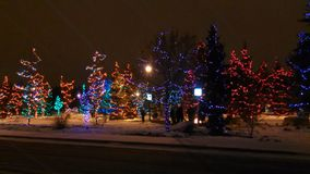 De winter in Net Bosje stock foto's
