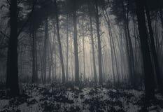 De winter nevelig bos met mist Royalty-vrije Stock Afbeelding