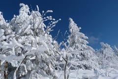 De winter, nieuw jaar Stock Afbeelding