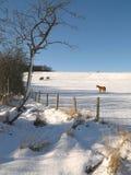 De winter - Noord-Yorkshire - Engeland Stock Afbeelding