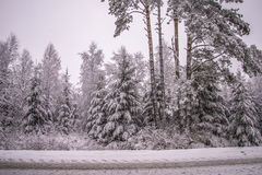 De winter in Noorse bossen Royalty-vrije Stock Afbeelding