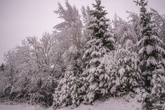De winter in Noorse bossen Royalty-vrije Stock Foto