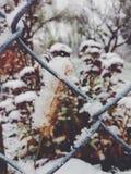 De winter is op ons Stock Foto