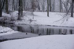 De winter in Park 6 Royalty-vrije Stock Foto