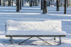 De winter in park Stock Afbeelding