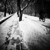 De winter in park Artistiek kijk in zwart-wit Royalty-vrije Stock Foto's